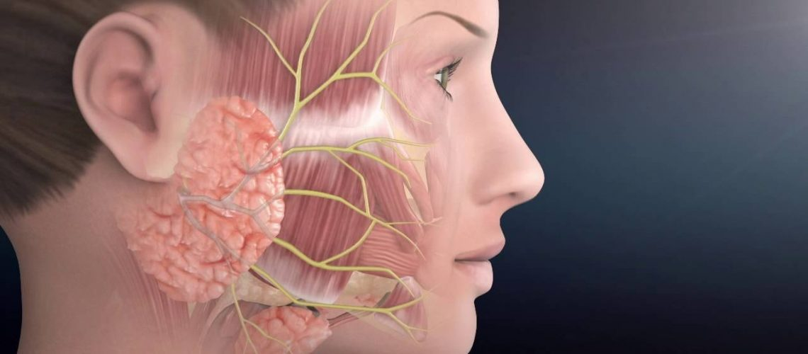 Anatomy Of Paralysis Facial Nerve Anatomy | The Facial Paralysis Institute - Youtube  - ANATOMY CHARTS